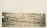 The Alouette Peat Farm c.1940s
